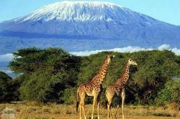 Żar tropików i śniegi Kilimandżaro, czyli zimowa migracja na południe